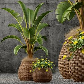Plants collection 55 LT 3d model Download  Buy 3dbrute