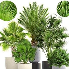 Collection of plants 185- 3d model Download  Buy 3dbrute
