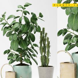 PLANTS 186 LT 3d model Download  Buy 3dbrute
