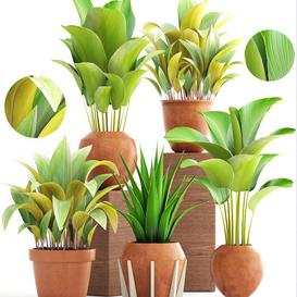Collection of plants 172  Clay pots 3d model Download  Buy 3dbrute