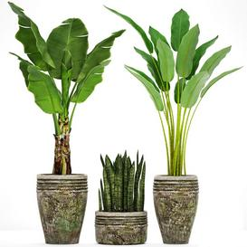 Collection of plants in pots 37 3d model Download  Buy 3dbrute