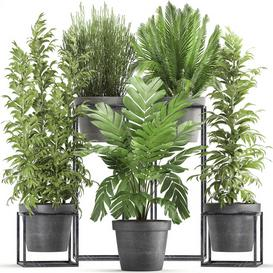 Plant collection 317 3d model Download  Buy 3dbrute