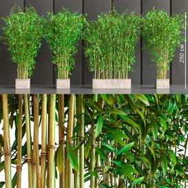 potted bamboo 3d model Download  Buy 3dbrute