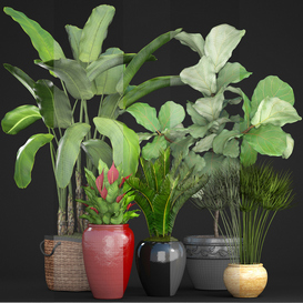 Collection of plants 75 3d model Download  Buy 3dbrute