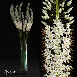 Eremurus 3d model Download  Buy 3dbrute