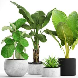 Potted Plants Collection 36 3d model Download  Buy 3dbrute