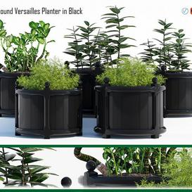 Round versailles planter 2 3d model Download  Buy 3dbrute