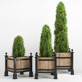 thuja occidentalis 3d model Download  Buy 3dbrute