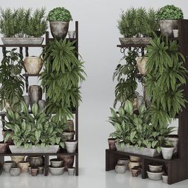 Plant collection 368 3d model Download  Buy 3dbrute