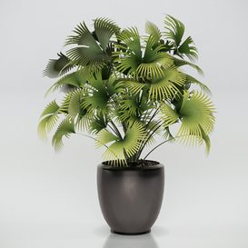 PLANTS 126 3d model Download  Buy 3dbrute