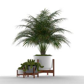 Plants collection 68 Modernica pots LT 3d model Download  Buy 3dbrute