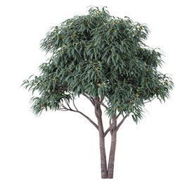 Deciduous tree with fruit - Medlar LT 3d model Download  Buy 3dbrute