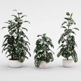 Plant collection 262- LT 3d model Download  Buy 3dbrute