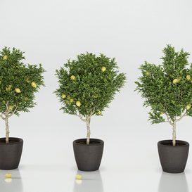 Decorative lemon trees 3 3d model Download  Buy 3dbrute