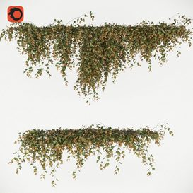 English Ivy creeper 3d model Download  Buy 3dbrute
