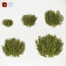 Forsythia - 8- Summer- 5 sizes 3d model Download  Buy 3dbrute