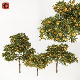 Orange Thee 3d model Download  Buy 3dbrute
