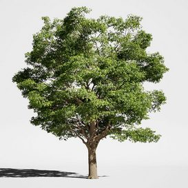 Tree Oak generic LT 3d model Download  Buy 3dbrute