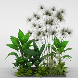 Plants collection 241 3d model Download  Buy 3dbrute