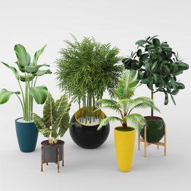 plants in pots 3d model Download  Buy 3dbrute